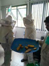 A retirada das colmeias foi feita com respeito às normas ambientais e os favos de mel foram preservados.